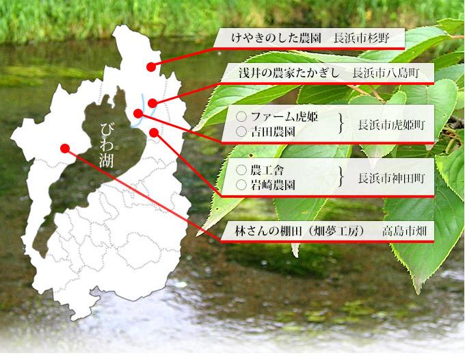 滋賀県の米づくり