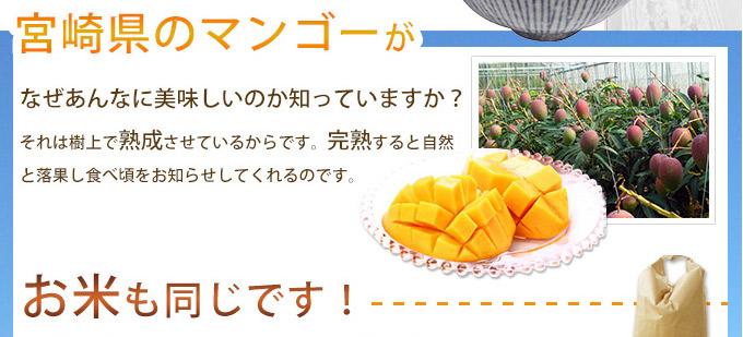 マンゴーのような熟成方法