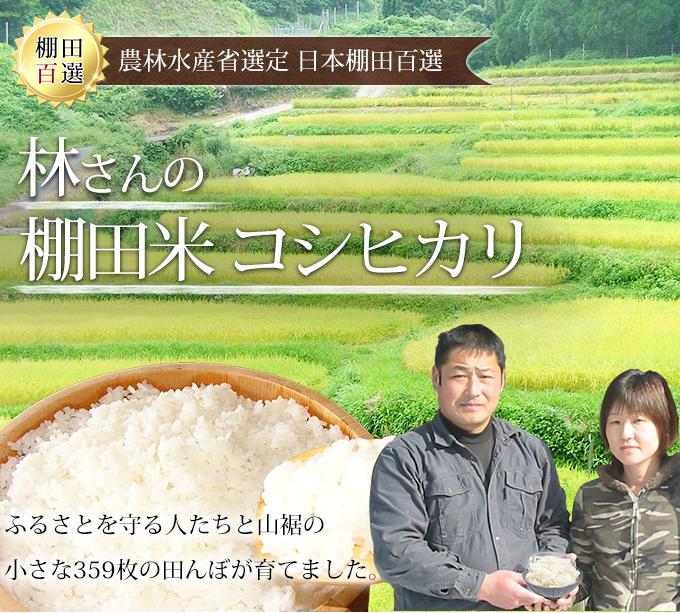 棚田米コシヒカリメイン画像
