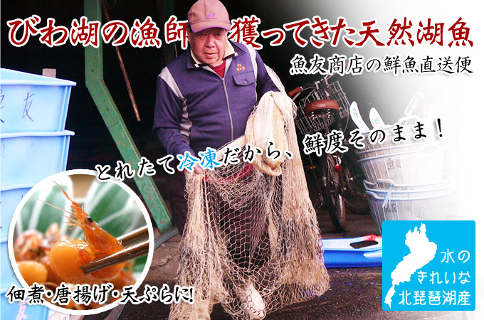 びわ湖の冷凍湖魚一覧
