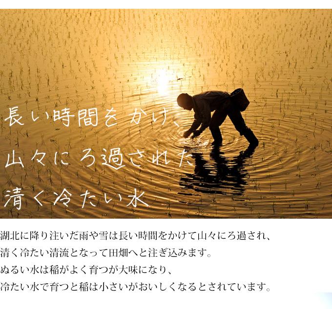 近江米は山のきれいな水で育てています。