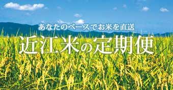 近江米定期