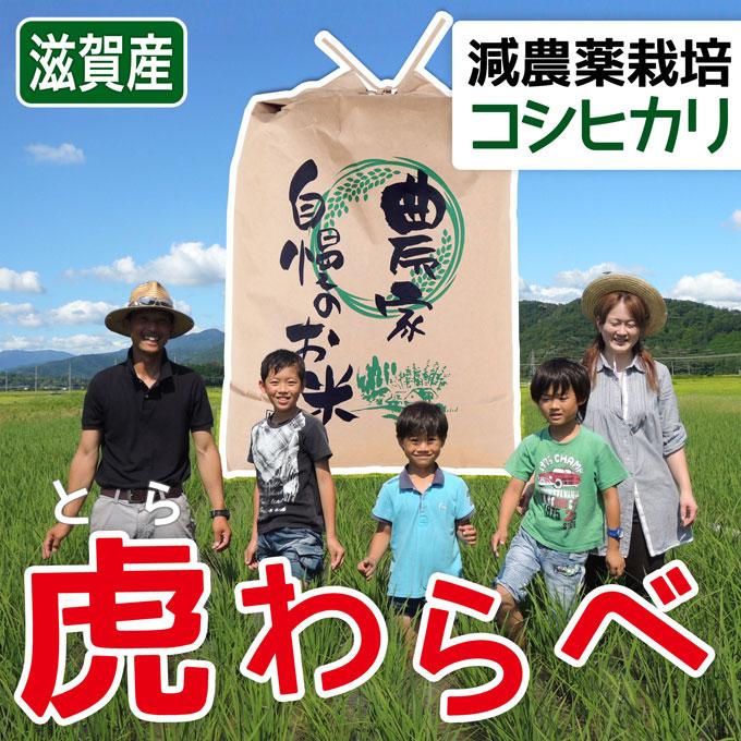砂地田んぼの近江米減農薬コシヒカリ